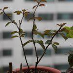 people-tree-99358_1280