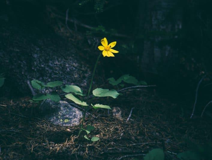 flower darkCROP