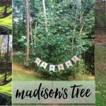 Madison's Tree