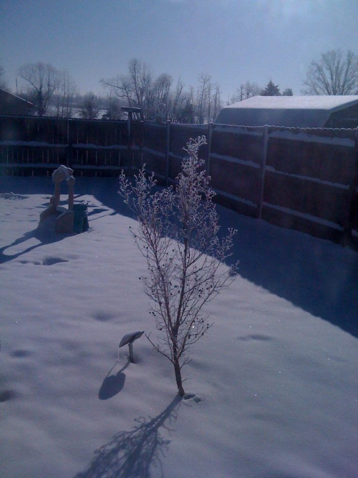 austins-tree_winter