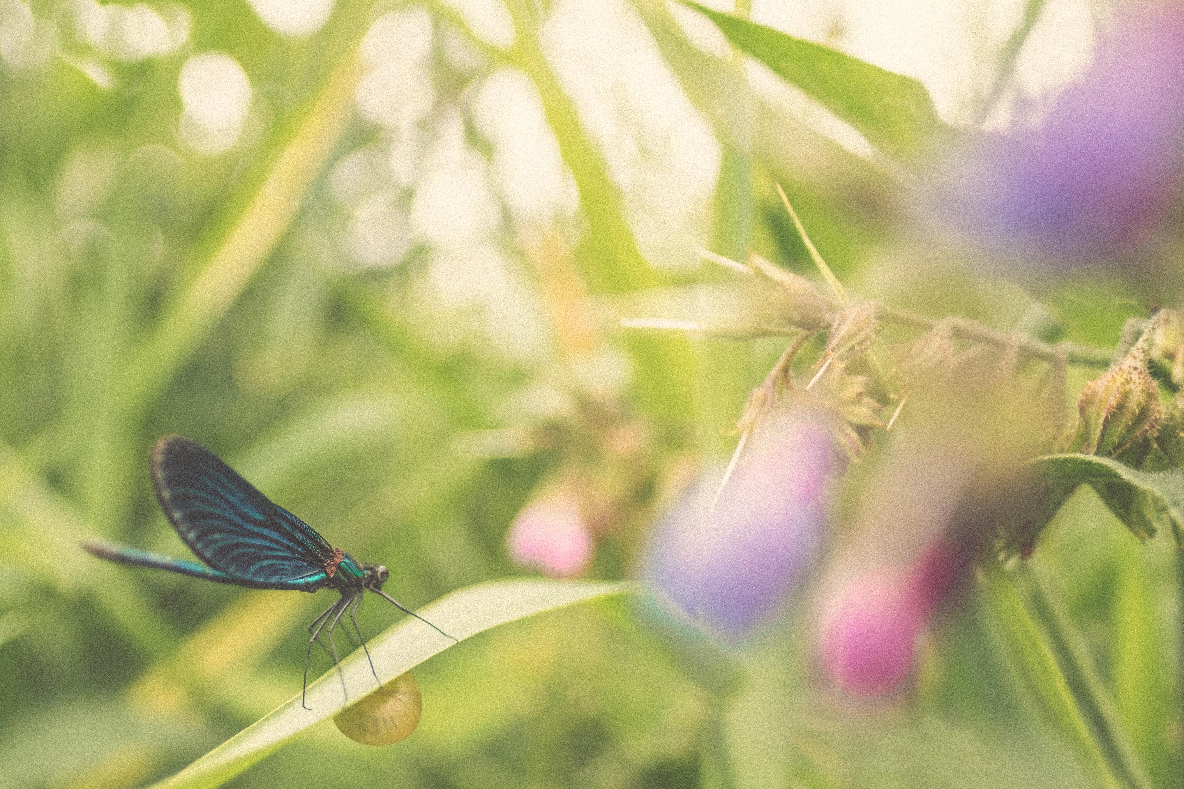 My Daughter Sends Dragonflies