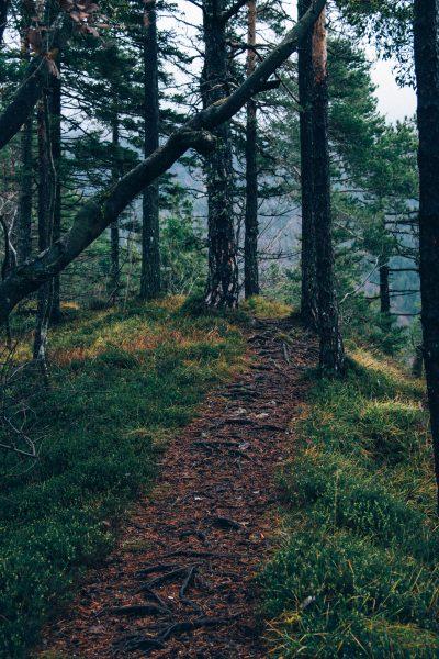 stumble-path-through-the-woods.jpeg
