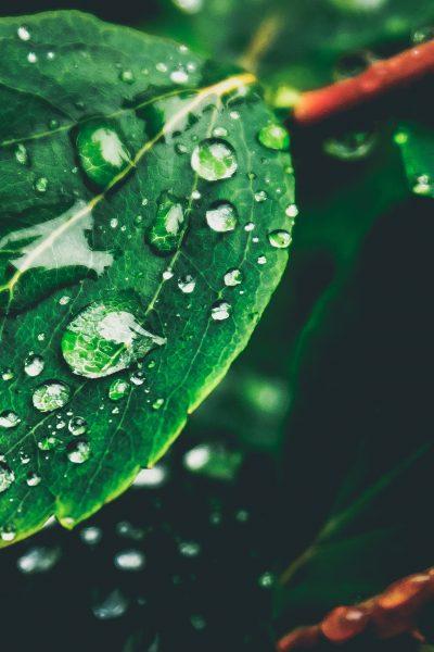 rain-like-tears-on-a-leaf.jpeg