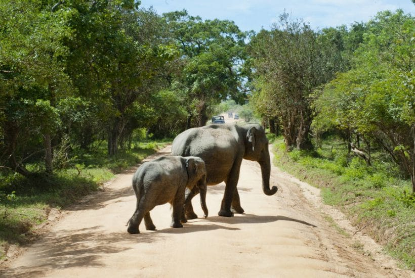 Mother and Baby Elephant Journey
