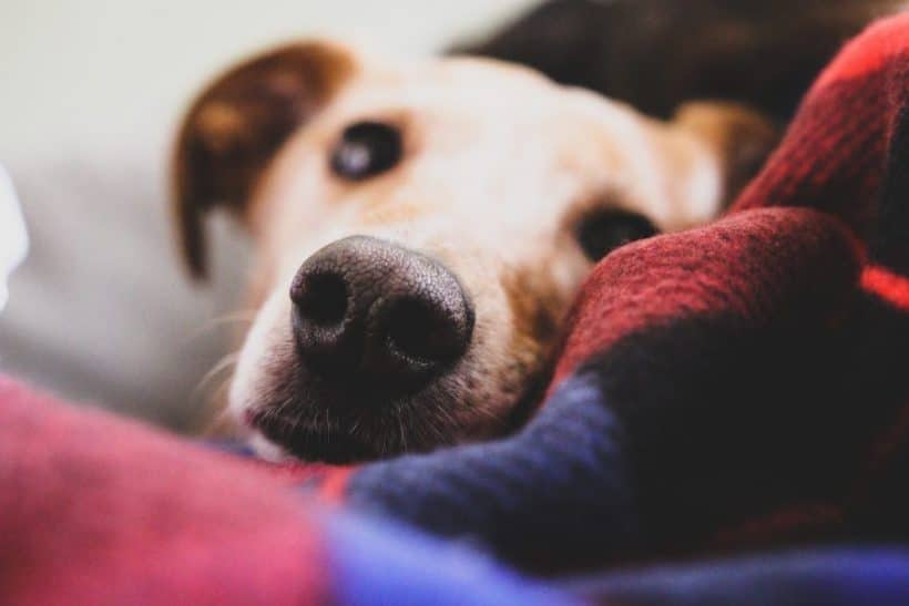 The Healing Power of Pets After Loss