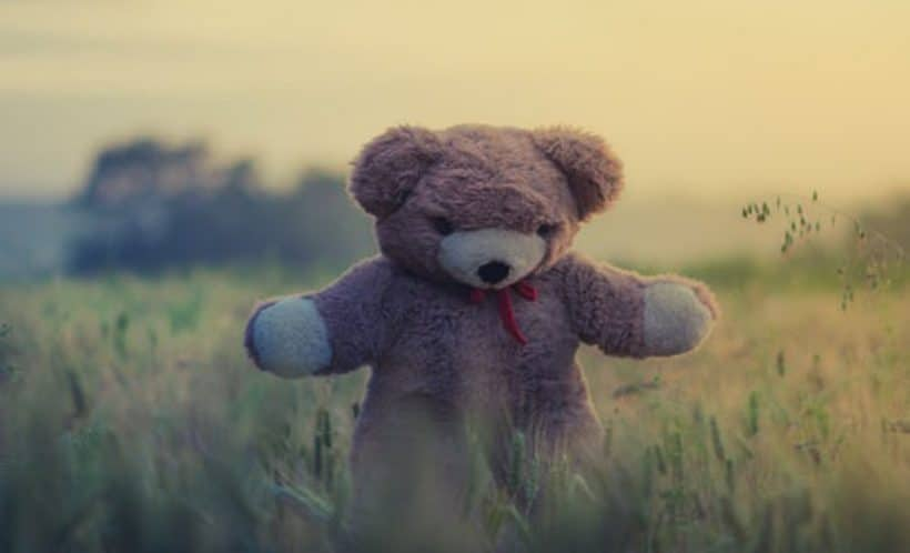 Teddy bear in a field. Just adopt.