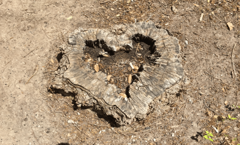 Death, Love And A Tree Stump