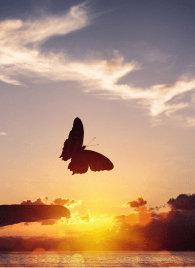 hand releasing a butterfly against a sunset